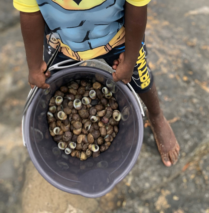 Collecting periwinkles