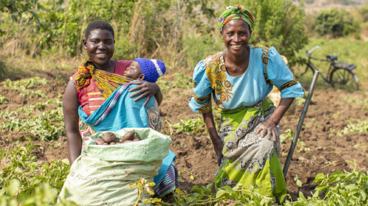 Marita and Eluby gathering potatoes in the fields, Malawi