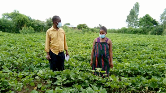 Wells Kumwenda from the International Potato Center with Everista in her potato fields